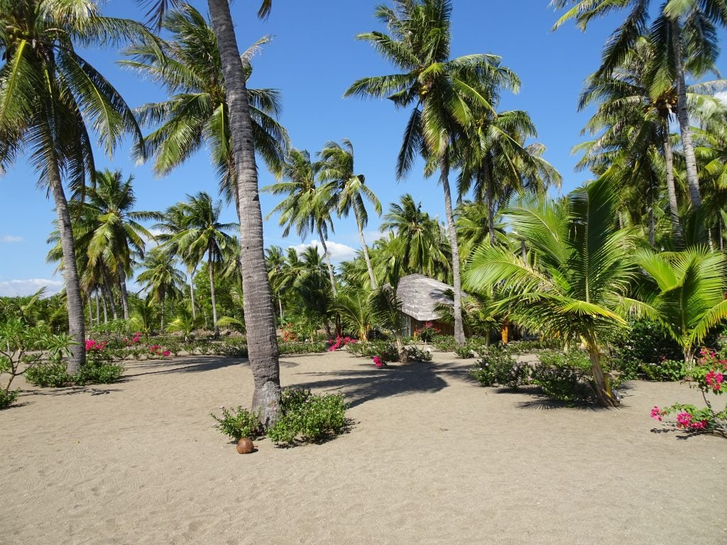 Unser kleines Strandparadies mit Blumen, einem Bungalow und jeder Menge Palmen.